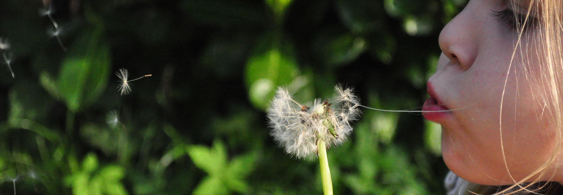 slider-Dandelion